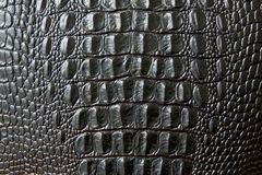 Free Close Up Of Black Snake Or Crocodile Skin Texture. Large Scales. Stock Photos - 134127093