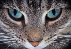 Close Up Of Cat Snout Stock Images