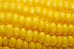 Close Up Of Corn Cob