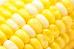 Close-up Of Corn Cob Royalty Free Stock Images