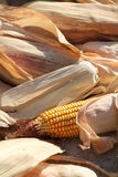 Close Up Of Corn Cobs Stock Photos