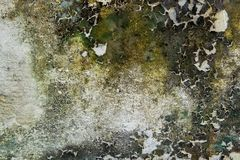 Free Close-up Of Dry Moss On White Cement Crack Wall And Peeled Paint Caused By Water And Sunlight. Peel Wall Of White House Paint. Royalty Free Stock Photos - 166138598