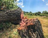 Free Close Up Of Felled Tree In The Forest Stock Image - 139035421