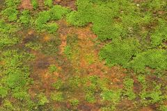 Free Close Up Of Green Moss Texture Background Is Growing On The Old Stone Wall Royalty Free Stock Photos - 197573068