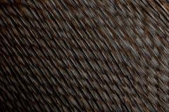Close-up Of Humboldt Penguin Feathers Stock Photos