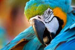 Free Close Up Of Macaw Parrot Stock Image - 190748251
