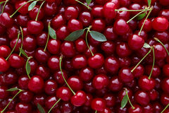 Close Up Of Pile Of Ripe Cherries With Stalks And Leaves. Royalty Free Stock Images