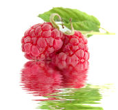 Close-up Of Raspberry Royalty Free Stock Images