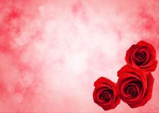 Close Up Of Red Rose Flower With Bokeh Light Background Royalty Free Stock Photography