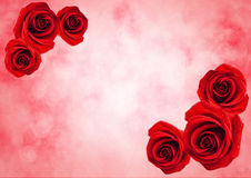 Close Up Of Red Rose Flower With Bokeh Light Background Stock Photo