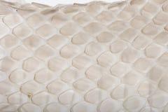 Free Close-up Of Squamata, Scaled Reptile Against White Stock Image - 11290981