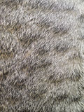 Close-up Of Tabby Cat Fur Texture Background Royalty Free Stock Image