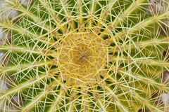 Free Close Up Of Thorn Cactus Succulent Texture Background Stock Photos - 162906263