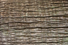 Free Close Up Of Tree Bark Texture For Background Royalty Free Stock Photography - 44106227