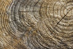 Close Up Of Tree Trunk