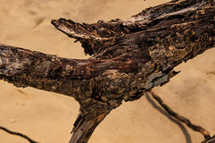 Close-up Of Twisted Twigs Buried In The Sand Of Paraty Mirim. Royalty Free Stock Photography