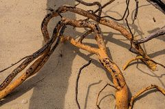 Close-up Of Twisted Twigs Buried In The Sand Of Paraty Mirim, A Tropical Beach Near Paraty. Stock Images