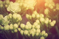 Close-up Of Young Fresh Flowers Growing On A Spring Morning Meadow, Royalty Free Stock Photography