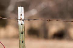 Close up of old barbed wire fence post Royalty Free Stock Image