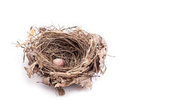 Close up old bird nest with one egg isolated on white Stock Image