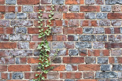 Close up of an old brick wall with creeping ivy Royalty Free Stock Photography