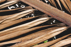 Close up of Old Decaying Palm leaf Royalty Free Stock Photography