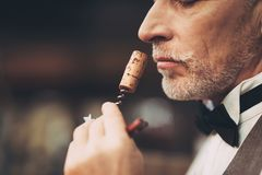 Close up. Old experienced sommelier smells wine stopper on corkscrew, assessing taste of drink. Wine tasting stock image