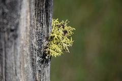 Close up: Old Fence Post with Lichen in Color stock images