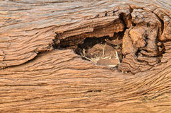 Close up of old gnarled tree. On light morning Royalty Free Stock Photo