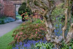 Close up of old gnarled tree trunk and colourful flowers in border outside the walled garden at Eastcote House, Hillingdon