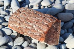 Log on the beach. Close-up on an old log, light stones, sharp sharpness Royalty Free Stock Photos