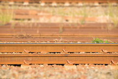 Close up Beside old metal Railroad tracks Royalty Free Stock Images
