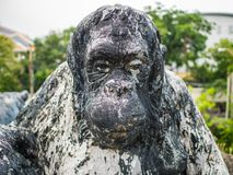 Close up Old Monkey statue,Vintage monkey statue royalty free stock image