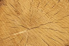 Close-up Of Old Pine Tree Rough Cross Section Background Texture Royalty Free Stock Photography
