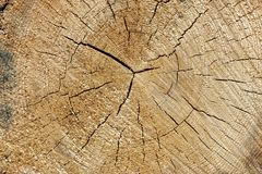 Close-up Of Old Pine Tree Rough Cross Section Background Texture Stock Image