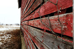Close up of old red barn Illinois. And old red side of a barn with tree branches Royalty Free Stock Photo
