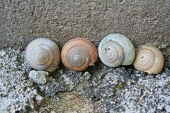 Old shells on wall background royalty free stock image