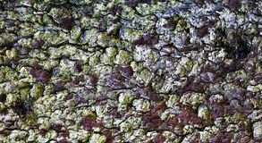 Close-up of an old tree bark Stock Image