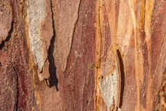 Close-up of an old tree bark royalty free stock images