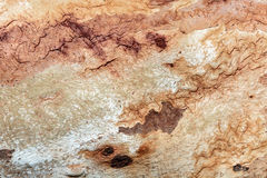 Close up of old tree bark Royalty Free Stock Photography