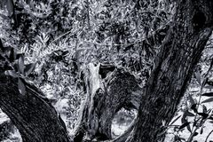 Close up from a old tree black and white stock images