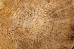 Close-up of old wood log Royalty Free Stock Images