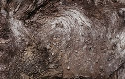 Old wood texture royalty free stock photography