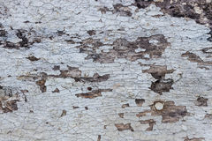 Close up old wood  texture background Royalty Free Stock Image