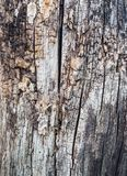 Close Up Old Wood Texture. Cracked dead old tree background vertical image. Close Up Old Wood Texture. Cracked dead old tree background. Vertical orientation of Stock Photography