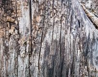 Close Up Old Wood Texture. Cracked dead old tree trunk background. Gorizontal orientation of image Royalty Free Stock Photos