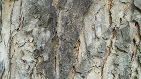 Close up Old Wood Tree. Texture Background Stock Photos