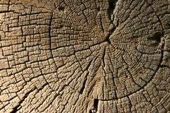 Close-up old wooden texture. Log Stock Photo