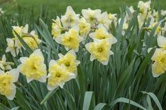 Close-up om bloei in wereld van installatie te bloeien royalty-vrije stock afbeeldingen