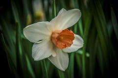 Close-up om bloei in wereld van installatie te bloeien royalty-vrije stock foto